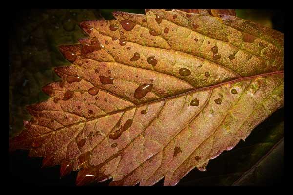 Autumnal2 photo