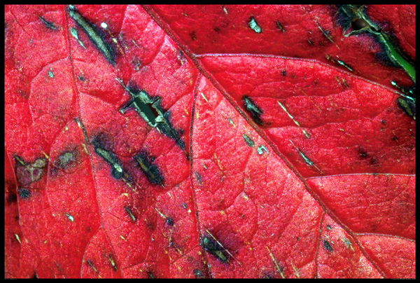 Leaftexture photo