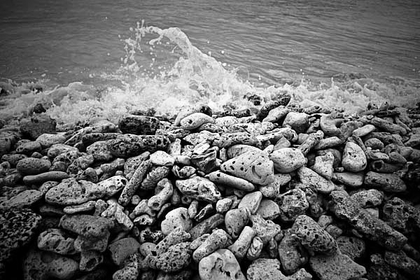 coral black and white photography