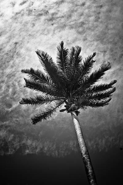 paradise black and white photography