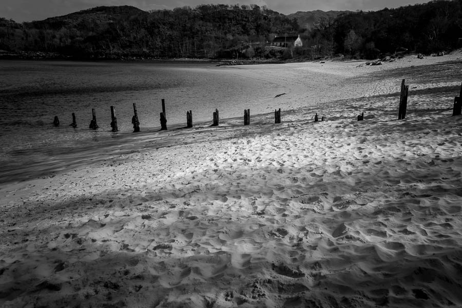 stumps black and white photography