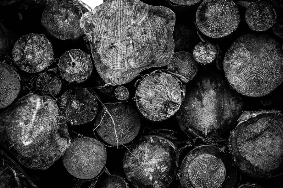 woodpile black and white photography