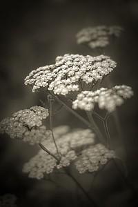 countrygarden - Black and White