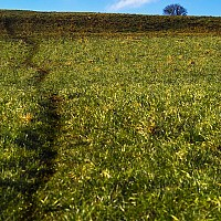 offthebeatenpath - Meandering footpath, 2004 -  photograph for sale