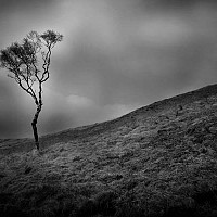 lonelytree - Tree in Saddleworth -  print for sale