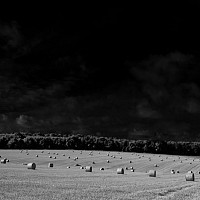 rolledup - In the fields around Oxford -  print for sale
