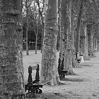 peace - In the gardens under the Eiffel Tower, 2008 -  photograph for sale