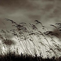 grasses - black and white photography for sale