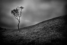 lonelytree black and white photography for sale